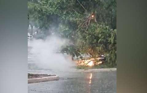 Árvore pega fogo ao cair em fio de alta tensão no Parque dos Poderes