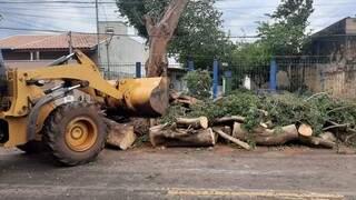 Maquinário recolhe troncos e galhos de árvore derrubada na Capital. (Foto: PMCG)