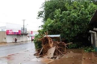 Árvore caiu e arrancou pedaço de calçada. (Foto: Henrique Kawaminami)