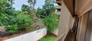 Árvore caiu por cima de muro e fechou a rua. (Foto: Direto das Ruas)