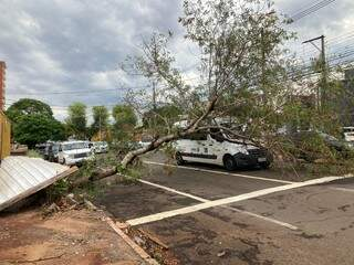 Árvore caiu sobre van da Saúde de São Gabriel do Oeste e acabou fechando o trânsito em duas faixas, sobrando apenas uma. (Foto: Mariely Barros)