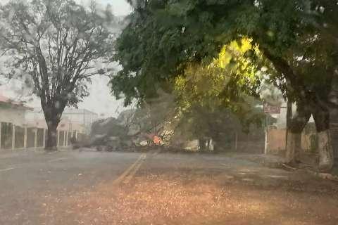 Chuva forte derruba árvores e fecha ruas em Campo Grande