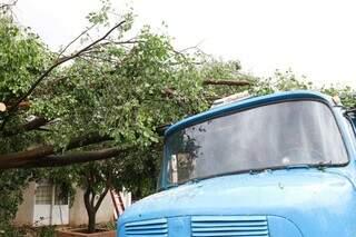 Galhos de árvore caíram e atingiram caminhão. (Foto: Henrique Kawaminami)