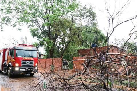 Bombeiros registram 96 quedas de árvores e vão priorizar casos em residências