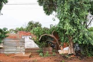 Árvores sobre a casa no Bairro São Conrado; quedas aconteceram nesta manhã, durante a forte chuva. (Foto: Henrique Kawaminami)