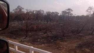 Vegetação completamente devastada pelo fogo próximo à Corumbá. (Foto: Wilma Torres)