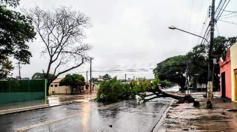 Chuva com vento começa na madrugada e derruba árvores em Dourados