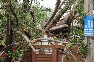 Casa do casal Naomi e Mauro, que também foi atingida pela figueira. (Foto: Henrique Kawaminami)