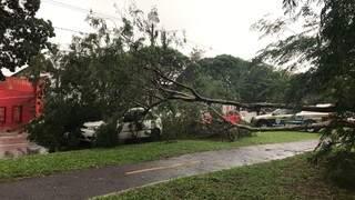 Árvore de 10 metros cai sobre carro que aguardava semáforo abrir na Avenida Afonso Pena. (Foto Mariely Barros)