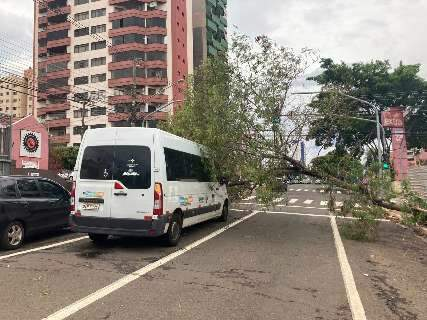 Árvore cai sobre ambulância em rua do Centro e trava trânsito do local