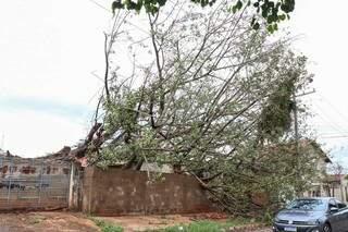Árvore de 25 metros caiu sobre casa e ficou escorada em muro. (Foto: Henrique Kawaminami)