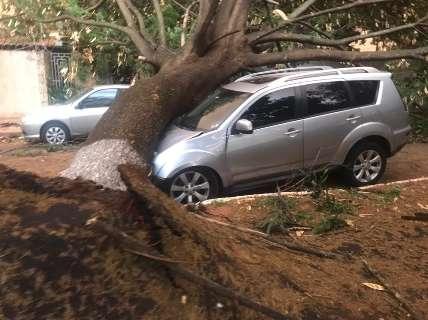 Sobre carros, ruas e canteiros, pelo menos 70 árvores caíram durante temporal