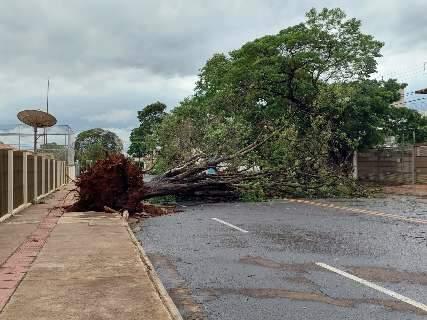 Duas árvores de grande porte caem e fecham ruas no Monte Líbano