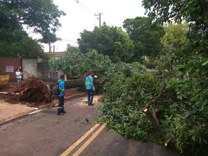 Prefeitura faz plantão para receber solicitações causadas por temporal