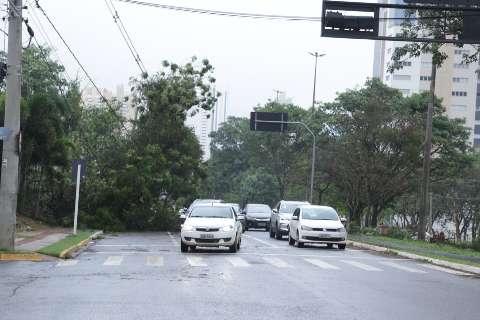 Após tempestade, cidade amanhece com ruas bloqueadas e semáforos desligados