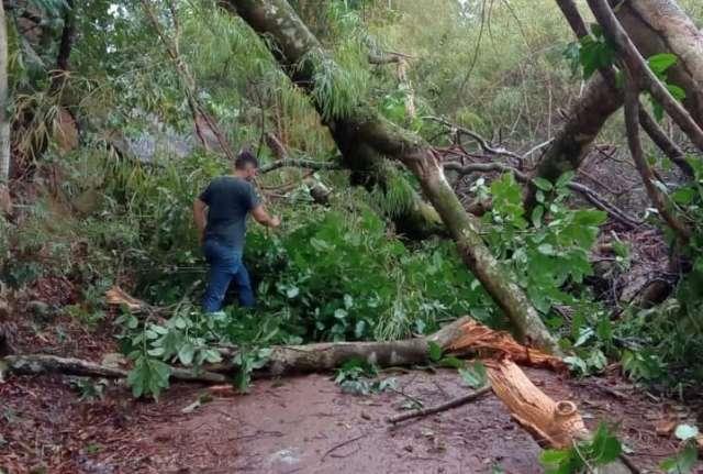 Acesso ao Morro do Paxixi é interditado por queda de árvore