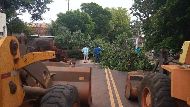 Prefeitura retira árvore que caiu sobre fiação e fechou rua no Jardim dos Vendas