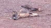 Cadela encosta em cabo caído no meio de rua e morre com choque