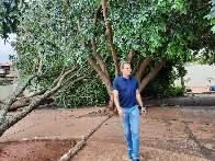 Prefeitura mobiliza 300 homens para remover 180 árvores caídas