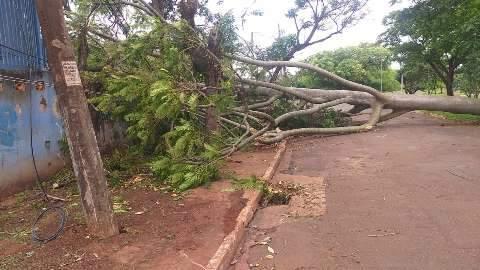 Ainda falta energia em 16 bairros e para retorno, árvores precisam ser cortadas