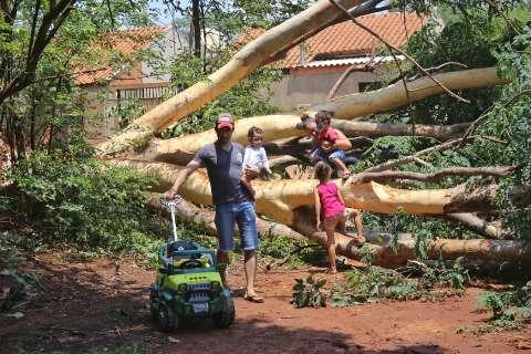 """Família poupa tempo e se diverte com crianças ao """"atravessar"""" árvore caída"""