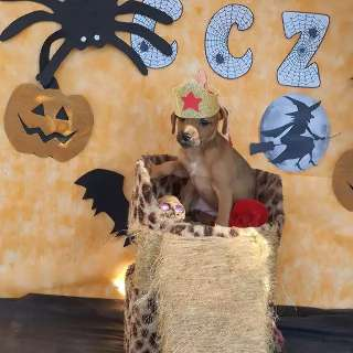 Cães e gatos vestidos para o Halloween procuram casa para viver
