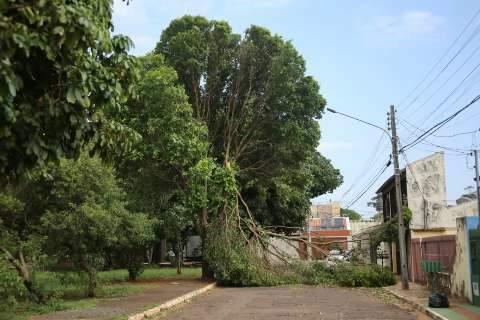 Prefeitura tem 100 pessoas para retirar árvores derrubadas por tempestade