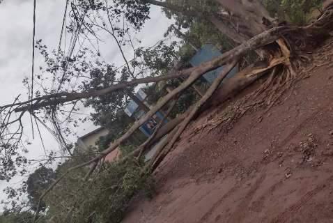 No Bairro Tijuca, árvore cai e deixa moradores sem energia há 5 dias