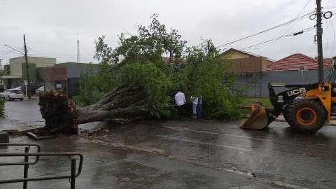 Nova Andradina decreta emergência por estragos de tempestade