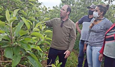 Funtrab tem 655 vagas em lavouras de maçã para indígenas