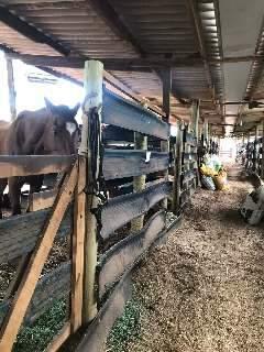 Dona de hípica relata que não tem luz e teme que cavalos fiquem sem água de poço