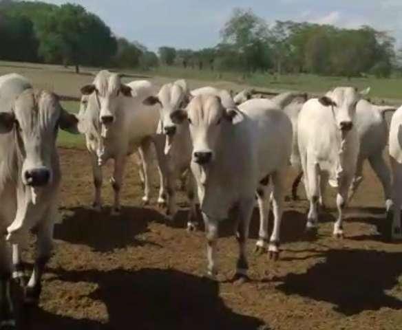Polícia recupera em outra cidade rebanho de R$ 200 mil furtados de fazenda