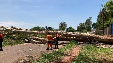 Depois de seis dias, eucalipto de 30 metros é removido e rua liberada