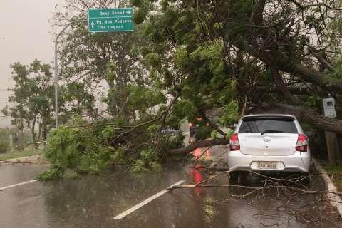 Com risco de temporal, disparam chamadas para vistorias em árvores