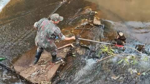 Morador encontra gavião-carcará ferido dentro do Córrego Segredo