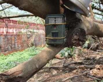 Câmeras vão monitorar onças perto de Corumbá e afugentar caçadores