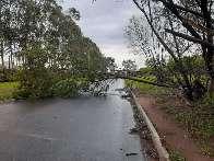 Avenida alagada e queda de árvore impedem trânsito em bairro