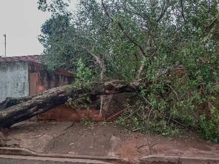 Chuva e ventania fazem árvore de 15 metros desabar sobre casa no Jardim Colúmbia
