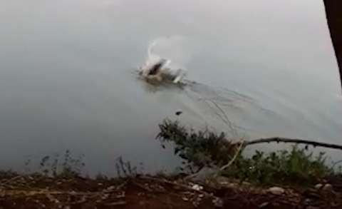 Homem não foi a 1ª vítima de jacaré que detesta visitas ao Lago do Amor