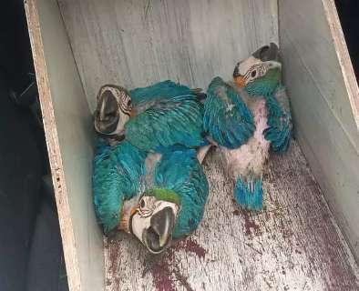 De arara a gavião-pombo, animais silvestres vítimas de tempestade são socorridos