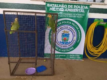Papagaios criados em cativeiro são resgatados após serem abandonados por dona